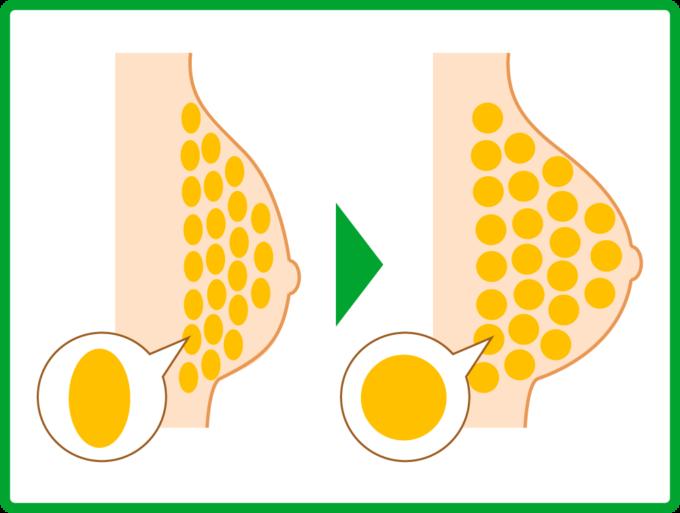 脂肪細胞を膨張のイメージ
